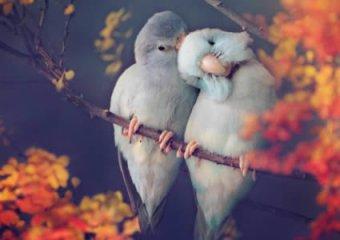 love-birds-package